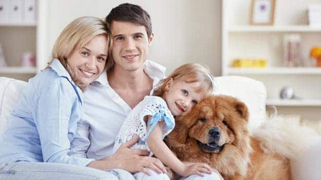 Wills & Trusts dog-young-family Direct Wills Belper